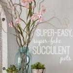 Super-Easy, Super-Fake Succulent Pots