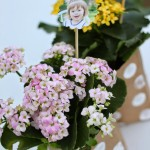 Photo Skewers for Mother's Day Flowers