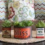 Vintage Container Succulent Planters