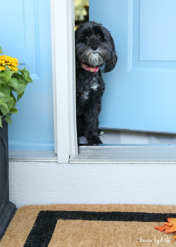 Little black dog in the doorway of the front stoop.