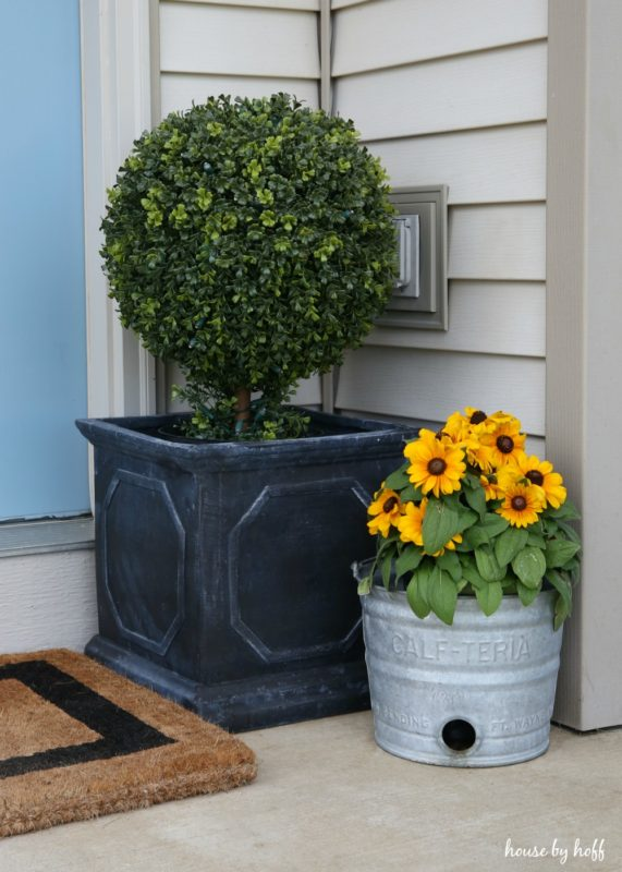 Boxwood topiary beside the yellow flowers on doorstep.