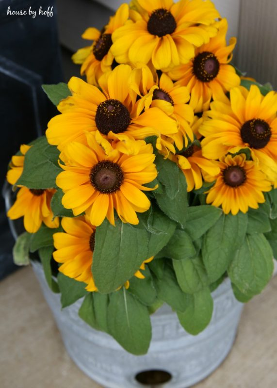 Bright yellow flowers in bucket.