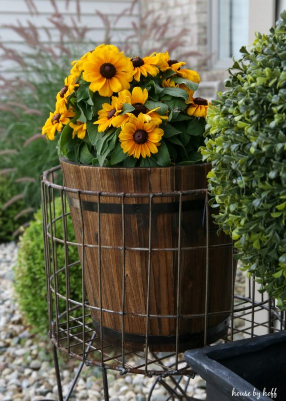 Sunflowers in wire basket on front stoop.