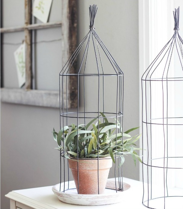Plant on table with wire cage around it.