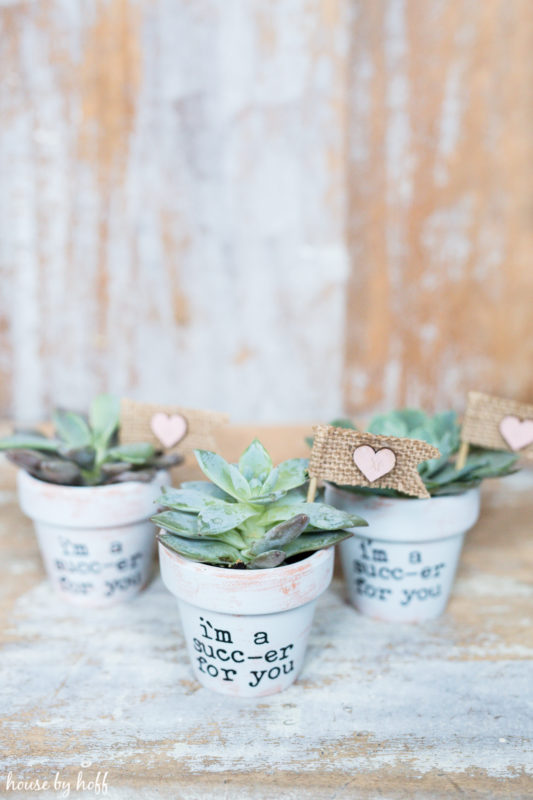 DIY Succulent Valentines via House by Hoff