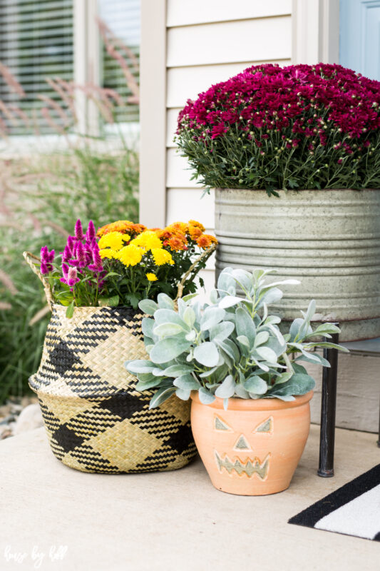 Fall Flowers and Plants in Seagrass Basket and Galvanized Planter.