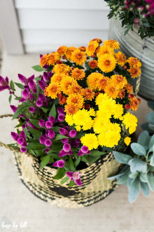 Colorful Fall Flowers in Basket in vibrant yellow and purple.