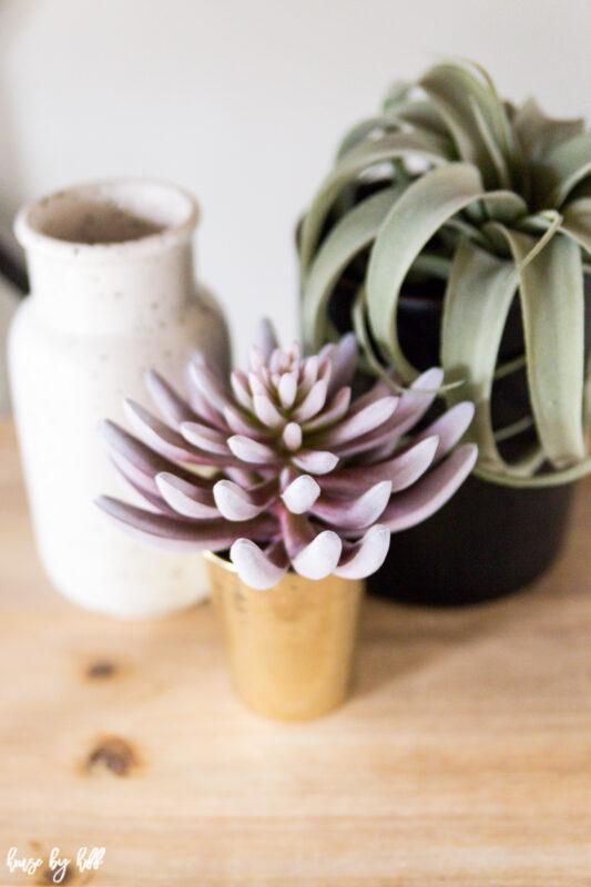 Open Shelves with Succulent Decor