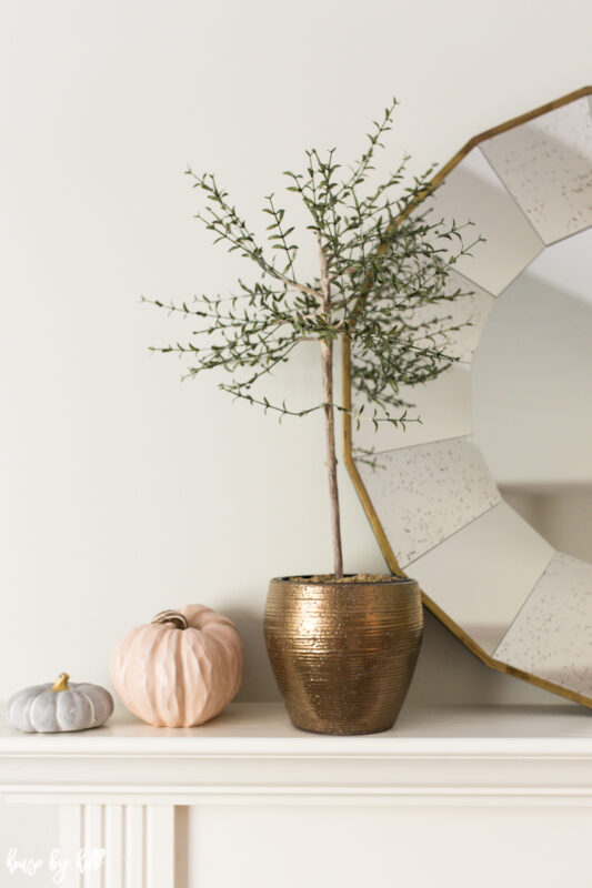 Thyme topiary in bronze pot on mantel with neutral pumpkins